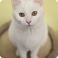 Adopt A Pet :: Harold - Byron Center, MI