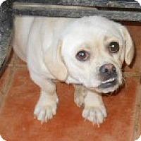 Adopt A Pet :: Bonfire - dewey, AZ
