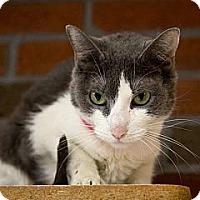 Adopt A Pet :: Daisy - Lancaster, MA