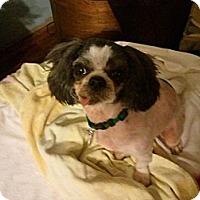 Adopt A Pet :: Marbles - Murfreesboro, TN