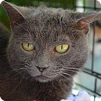 Adopt A Pet :: Maxi - Brooklyn, NY