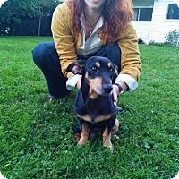 Adopt A Pet :: Winky - Medora, IN