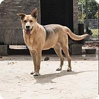 Adopt A Pet :: Grace - Key Biscayne, FL