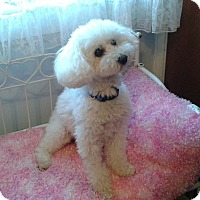 Adopt A Pet :: Heidi - Mississauga, ON