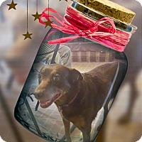 Adopt A Pet :: Jamie SUPER URGENT - Sacramento, CA