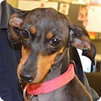Adopt A Pet :: Maddie - Springfield, VA