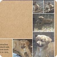 Adopt A Pet :: Toby meet me 2/5 - Manchester, CT