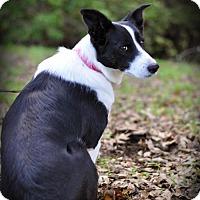 Adopt A Pet :: Tessa - urgent! - Milpitas, CA