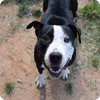 Adopt A Pet :: HUGO - Atlanta, GA