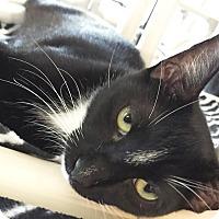 Adopt A Pet :: Walter - Boca Raton, FL