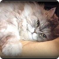 Adopt A Pet :: JJ - Gilbert, AZ