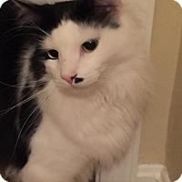 Adopt A Pet :: Freddie - Devon, PA