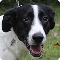 Adopt A Pet :: TRINKET - Pine Grove, PA