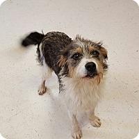 Adopt A Pet :: Dillon - Southington, CT