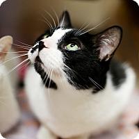 Adopt A Pet :: Gizzy - Appleton, WI