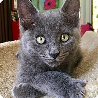 Adopt A Pet :: Versace - Southington, CT