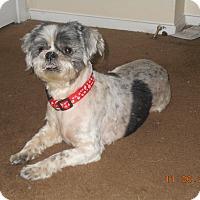Adopt A Pet :: gypsy - haslet, TX