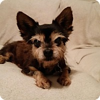 Adopt A Pet :: Cody is So Adorable! - Quentin, PA