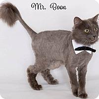 Adopt A Pet :: Mr. Boon - Sherman Oaks, CA