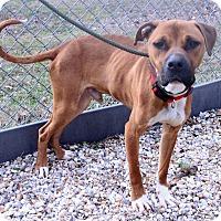 Adopt A Pet :: Simon  Intake #42 - Tarboro, NC