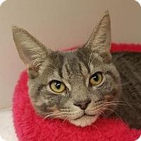 Adopt A Pet :: Boosie - Fairfax, VA