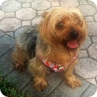 Adopt A Pet :: Tater Tot - Davie, FL