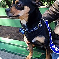 Adopt A Pet :: Rufus - San Francisco, CA