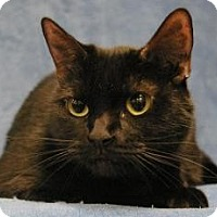 Adopt A Pet :: Princess - Sacramento, CA
