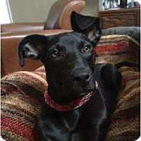 Adopt A Pet :: Zuri - Richmond, VA