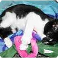 Adopt A Pet :: Pogo - Marietta, GA