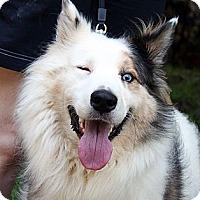 Adopt A Pet :: Nibbles - PENDING - Savannah, GA