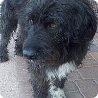 Adopt A Pet :: Bert - Scottsdale, AZ