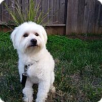 Adopt A Pet :: Chester - Santa Ana, CA