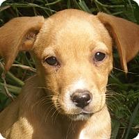 Adopt A Pet :: Cadie - Staunton, VA