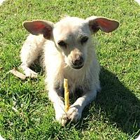 Adopt A Pet :: 'Ellie' - Fresno, CA