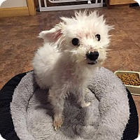 Adopt A Pet :: Julius - Bernardston, MA