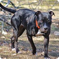 Adopt A Pet :: Alexis - Queenstown, MD