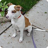 Adopt A Pet :: Bernadette - Lakeville, MN