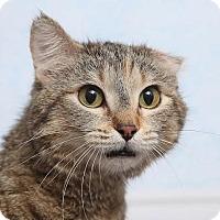 Adopt A Pet :: Fiona - Chippewa Falls, WI