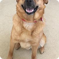 Adopt A Pet :: Teddy - Manhasset, NY