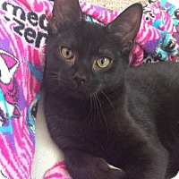 Adopt A Pet :: Gavin - Davison, MI