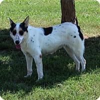 Adopt A Pet :: Moon - Harmony, Glocester, RI