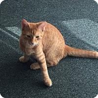 Adopt A Pet :: Ben - Middletown, CT