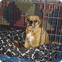 Adopt A Pet :: DYLAN - Bolingbrook, IL