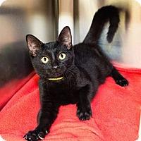 Adopt A Pet :: Steve Harvey - Seville, OH