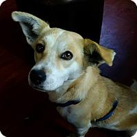 Adopt A Pet :: Elsa - Lima, PA