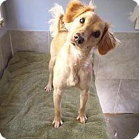 Adopt A Pet :: Faith - Eugene, OR