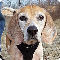 Adopt A Pet :: Dallas - Grayslake, IL