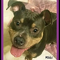 Pit Bull Terrier Mix Dog for adoption in Memphis, Tennessee - Mikki