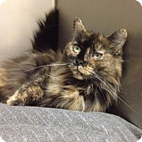 Adopt A Pet :: B-2 Ms. Kitty - Triadelphia, WV